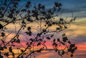 Pastel Silhouette - Jordan Lake, NC © jj raia